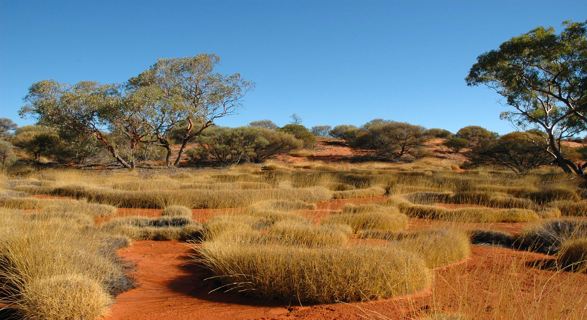 great victoria desert tour
